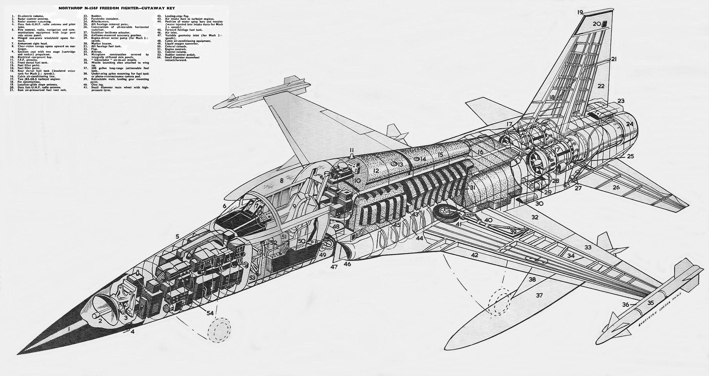 drawn-tiger-two-328381-8998064